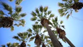 Rami del branchePalm della palma in sole Resto su un'isola soleggiata fra le palme Il concetto delle vacanze estive meravigliose stock footage