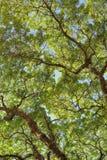 Rami del cielo Fotografie Stock