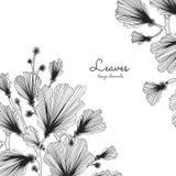 Rami del ginkgo biloba con le foglie Pianta botanica medica e isolata Immagini Stock