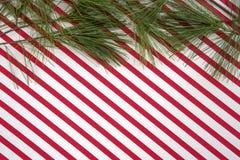 Rami del pino con le bande del bastoncino di zucchero Fotografia Stock