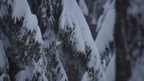 Rami del pino della forte nevicata archivi video