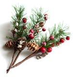 Rami del pino di Natale con le bacche Immagini Stock Libere da Diritti