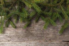 Rami del pino o dell'abete fotografia stock libera da diritti