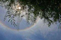 Rami del tamarindo nell'ambito dell'anello dell'alone del sole Fotografia Stock Libera da Diritti