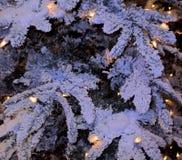 Rami dell'abete della neve Immagine Stock