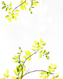Rami dell'albero con le foglie verdi gialle Immagini Stock