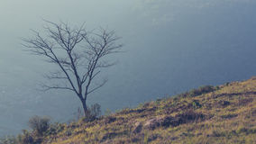 Rami dell'albero sfrondato Fotografie Stock