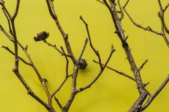 Rami dell'albero su fondo giallo Fotografie Stock Libere da Diritti