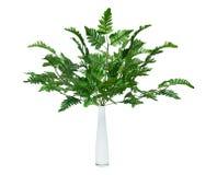 Rami della felce in un vaso bianco fotografie stock