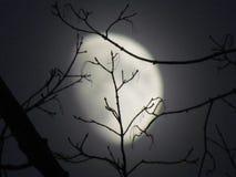 Rami della luna Fotografia Stock