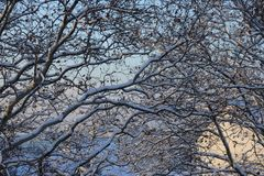 Rami della neve Fotografia Stock