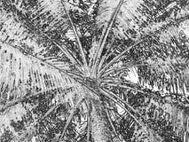 Rami della palma Immagini Stock