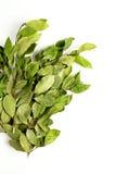 Rami delle foglie della baia dell'alloro su bianco Immagini Stock Libere da Diritti