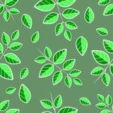 Rami delle foglie di pizzo verdi Fotografie Stock