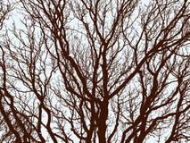 Rami delle latifoglie nell'inverno Immagine Stock