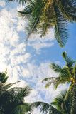 Rami delle palme nell'ambito del fondo del cielo fotografia stock libera da diritti