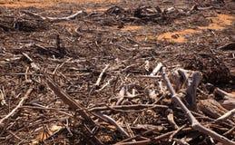 Rami di alberi del legname galleggiante Fotografia Stock