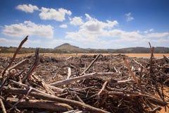 Rami di alberi del legname galleggiante Immagine Stock