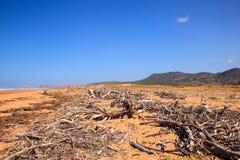 Rami di alberi del legname galleggiante Fotografia Stock Libera da Diritti