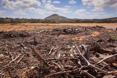 Rami di alberi del legname galleggiante Immagini Stock Libere da Diritti