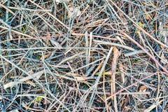 Rami di albero asciutti Fotografie Stock