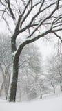Rami di albero in Central Park Fotografia Stock