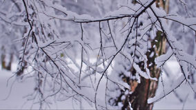 Rami di albero che dimenano lentamente archivi video