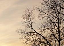 Rami di albero che uguagliano fondo Immagini Stock Libere da Diritti