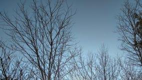 Rami di albero in cielo blu Fotografia Stock Libera da Diritti