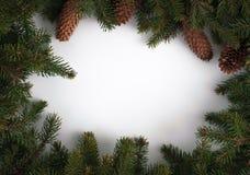 Rami di albero con i coni e posto per il vostro testo fotografia stock libera da diritti