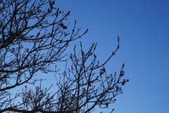 Rami di albero con i precedenti del cielo Fotografie Stock