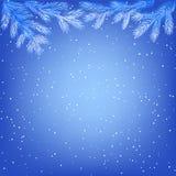 Rami di albero congelati Immagini Stock