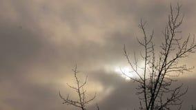 Rami di albero contro il cielo grigio nevicata del ` s stock footage