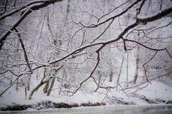 Rami di albero del fiume Fotografie Stock Libere da Diritti