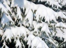 Rami di albero dell'abete di Snowy come fondo immagini stock