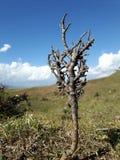 Rami di albero desolati Fotografie Stock Libere da Diritti