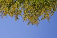 Rami di albero di autunno un giorno soleggiato con cielo blu immagini stock libere da diritti