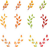 Rami di albero di caduta, Autumn Trees, vettori della foglia Immagine Stock