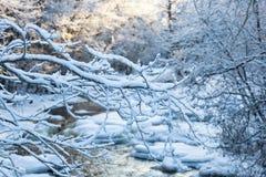 Rami di albero di Snowy Immagini Stock Libere da Diritti