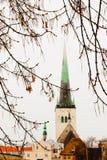 Rami di albero e vecchia Tallinn nei precedenti fotografie stock