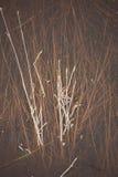 Rami di albero ed erba astratti congelati - foto invecchiata Immagini Stock