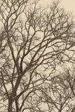 Rami di albero ed erba astratti congelati - foto invecchiata Fotografia Stock Libera da Diritti