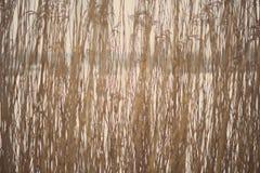Rami di albero ed erba astratti congelati - foto invecchiata Fotografia Stock