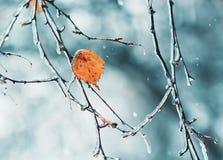 rami di albero frizzanti coperti di ghiaccio in maltempo Fotografia Stock Libera da Diritti