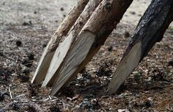 Rami di albero implementati dentro ad un recinto fotografia stock libera da diritti