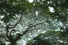 Rami di albero, modello denso Fotografia Stock Libera da Diritti