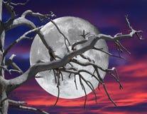 Rami di albero morti sopra la luna piena e Violet Red Sunset Sky Fotografia Stock