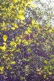 Rami di albero nel tono d'annata Fotografia Stock Libera da Diritti