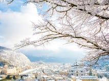 Rami di albero nella priorità alta con il fiume e la fortezza di paesaggio urbano di Salisburgo Immagine Stock