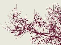 rami di albero nella stagione di autunno Fotografie Stock Libere da Diritti